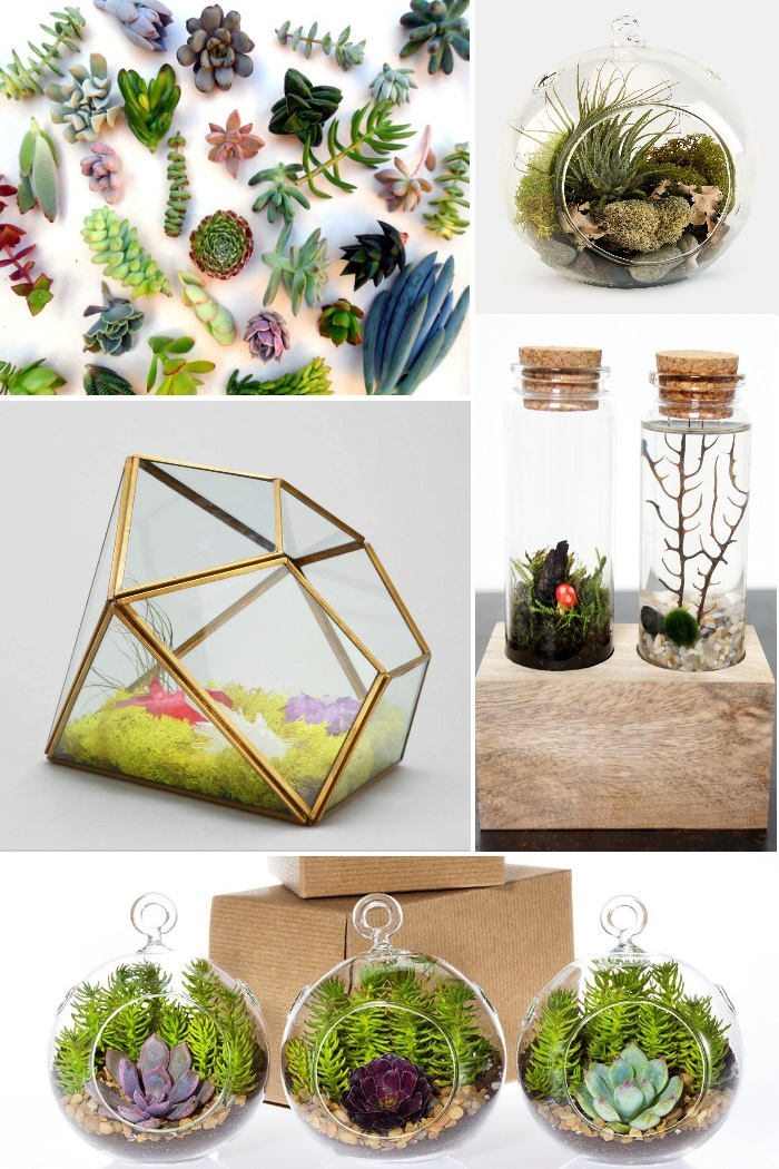 cool terrariums to make