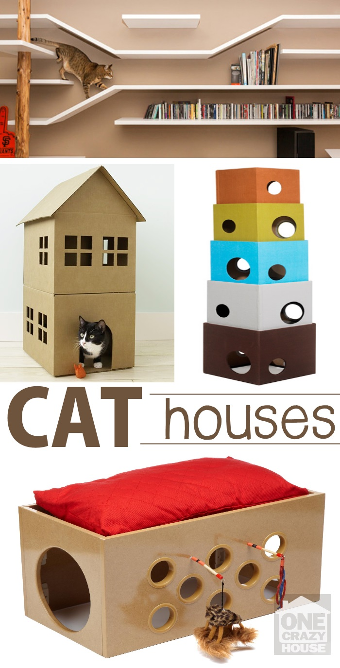 For all the Cat Lovers Out There.