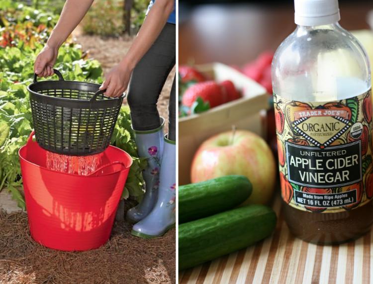use vinegar to wash garden produce