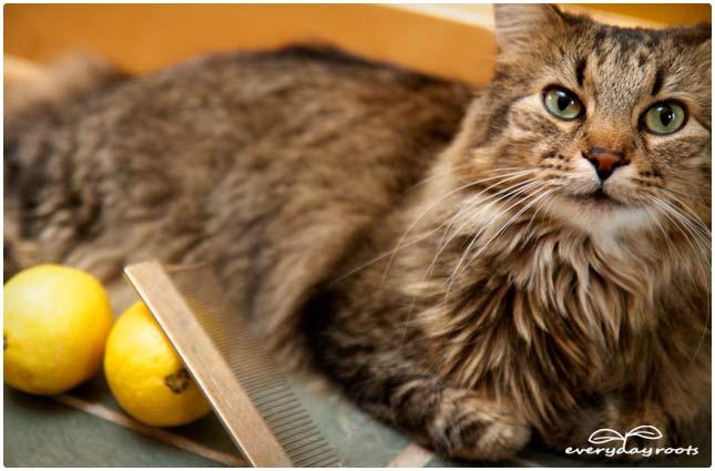 hyperthyroidism in cats prognosis