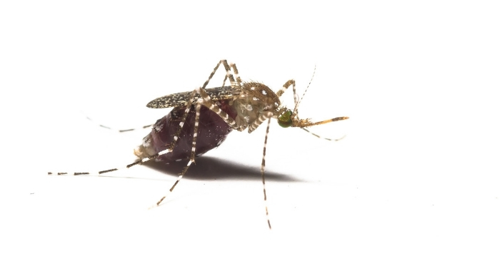 These super simple mosquito tips may be just what you need to keep the mosquitos far far away this year! If you can stop them biting, that's the best! #mosquitotips #bugbites #remediesforbugbites #onecrazyhouse