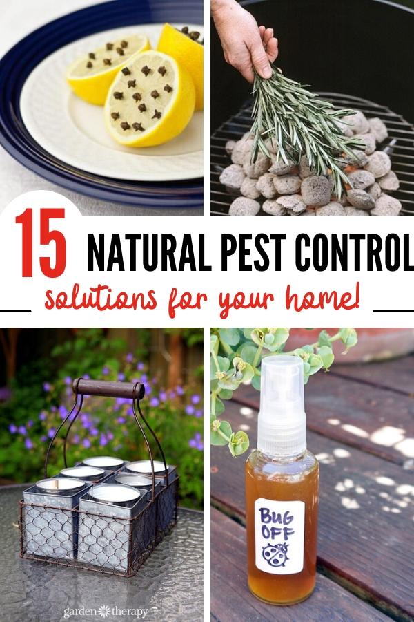 natural pest control solutions pin image B