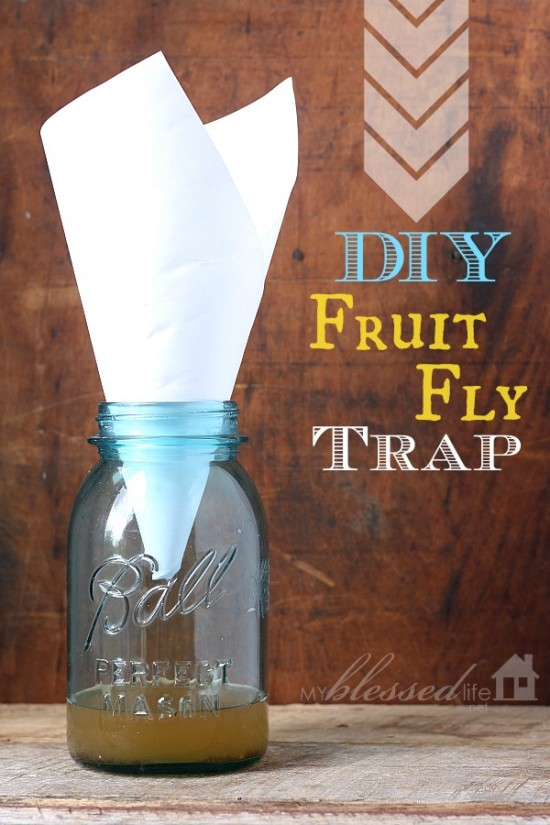 Jar with paper funneled out of the top and fruit fly trap solution in the bottom