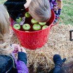 kid bobbing for apples
