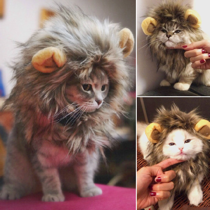 cat lion head costume