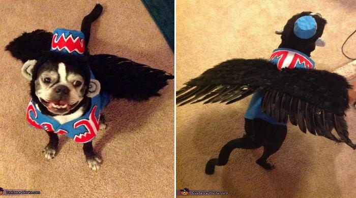 diy pet costume for halloween