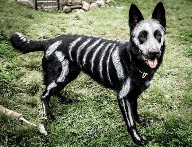dog skeleton paint