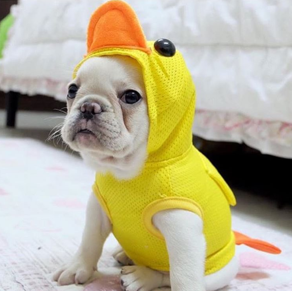 hilarious pet costume