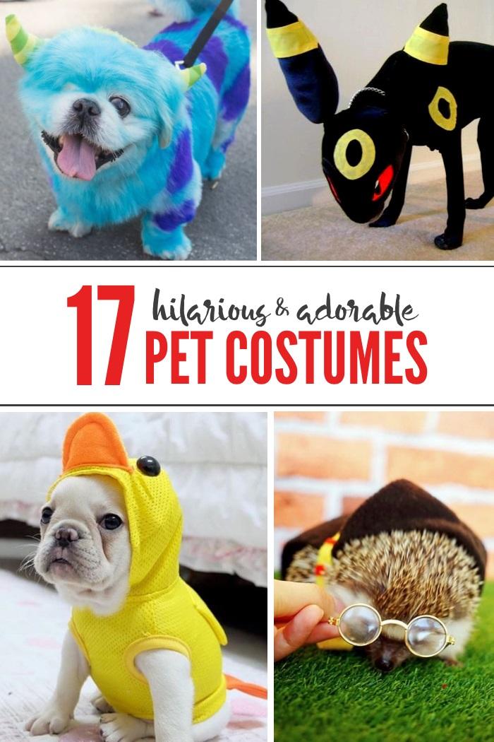 hilarious pet costumes