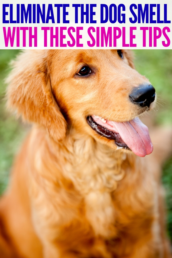 If you're looking for crazy simple tips for getting rid of the dog smell, you won't want to miss out on these DIY remedies! #gettingridofthedogsmell #onecrazyhoue #doglife #scents