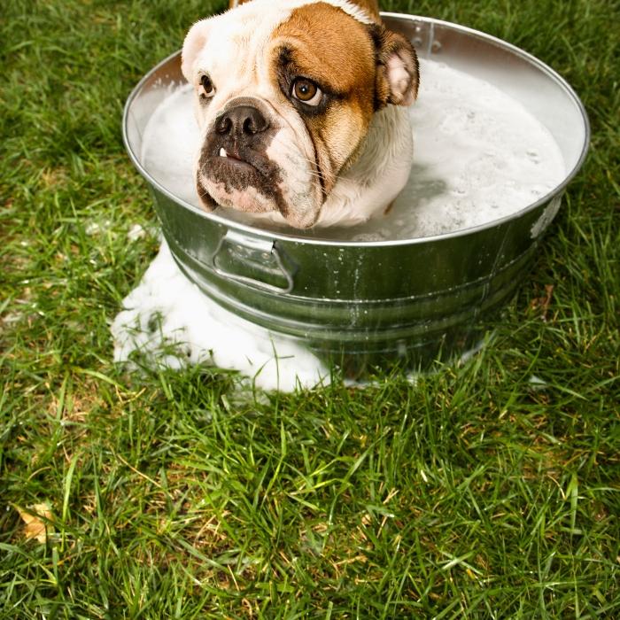 tips to make your dog smell good