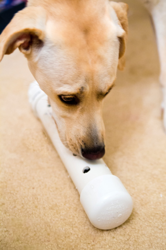 dog-enrichment-toy