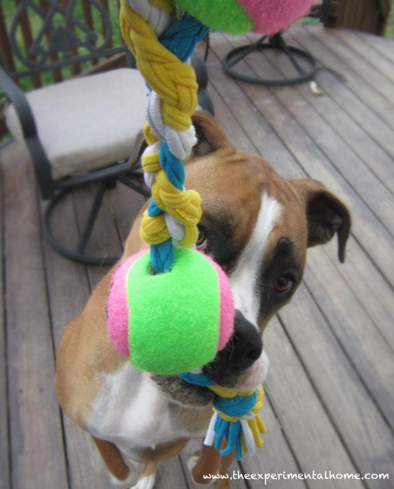 dog-toy-from-tshirt-yarn