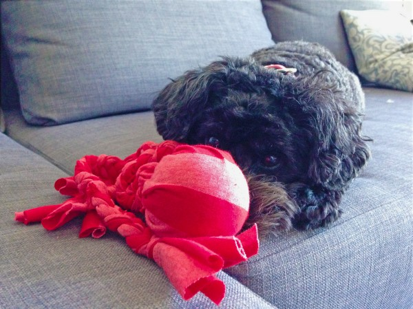 tshirt-ball-dog-toy