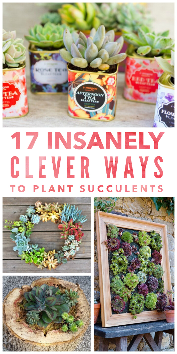17 Insanely Creative Ways to Plant Succulents