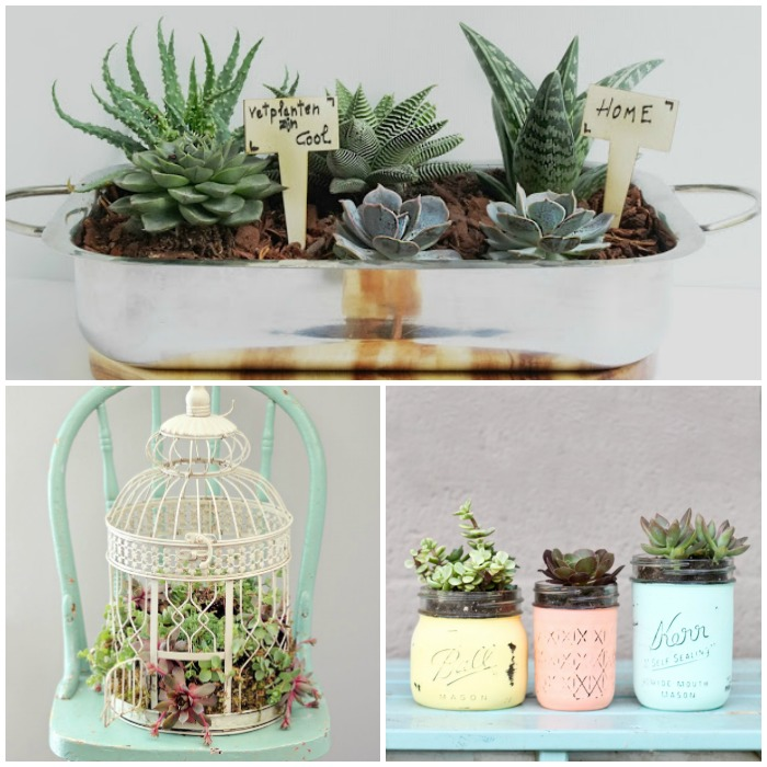 gorgeous-succulent-planter-ideas