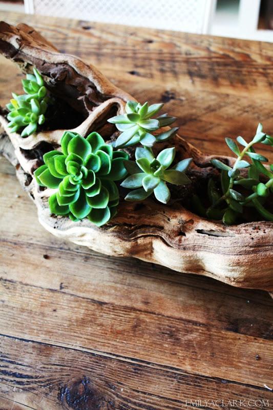 driftwood-succulent-planter