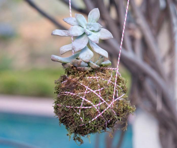 hanging-succulent-planter