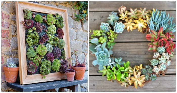 17 Insanely Clever Ways to Plant Succulents
