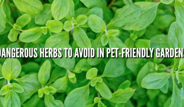 Pet-Friendly Gardening Dangerous Plants to Avoid