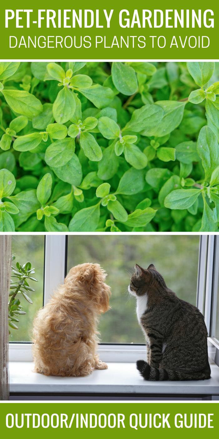 Pet-Friendly Gardening Dangerous Plants to Avoid