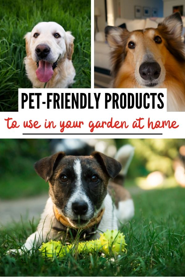 pet-friendly products