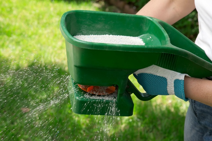 Feed your lawn to prevent weeds