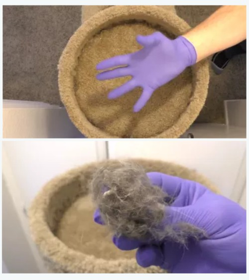 glove to remove pet hair
