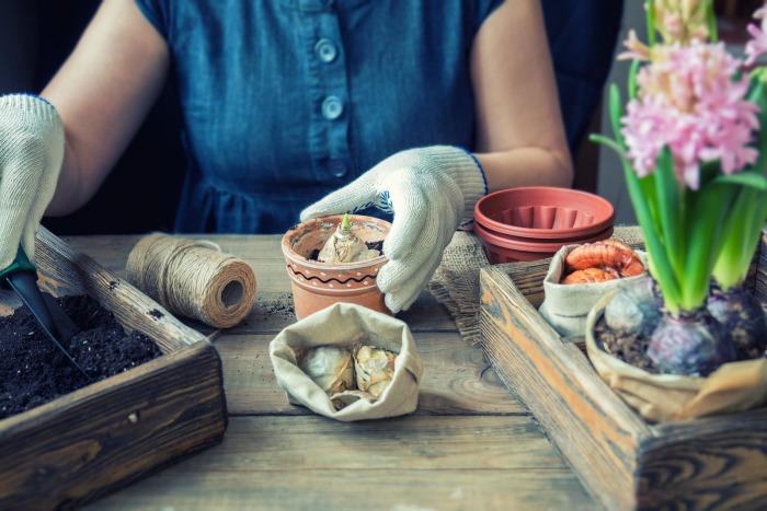 Fall Gardening Tips - Bring in Tubers or Bulbs