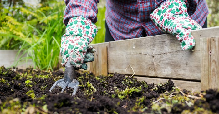Fall Gardening Tips – How To Prepare for Winter
