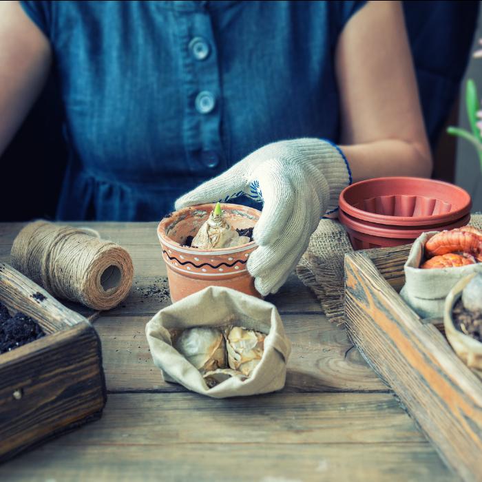 7 Fall Gardening Tips