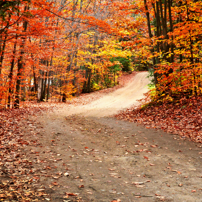 Fabulous & Fun Fall Activities For the Entire Family