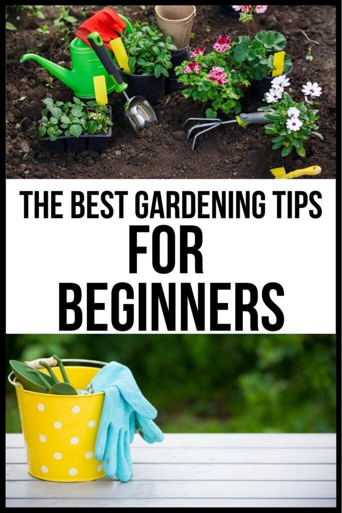 gardening tips for beginners pin image