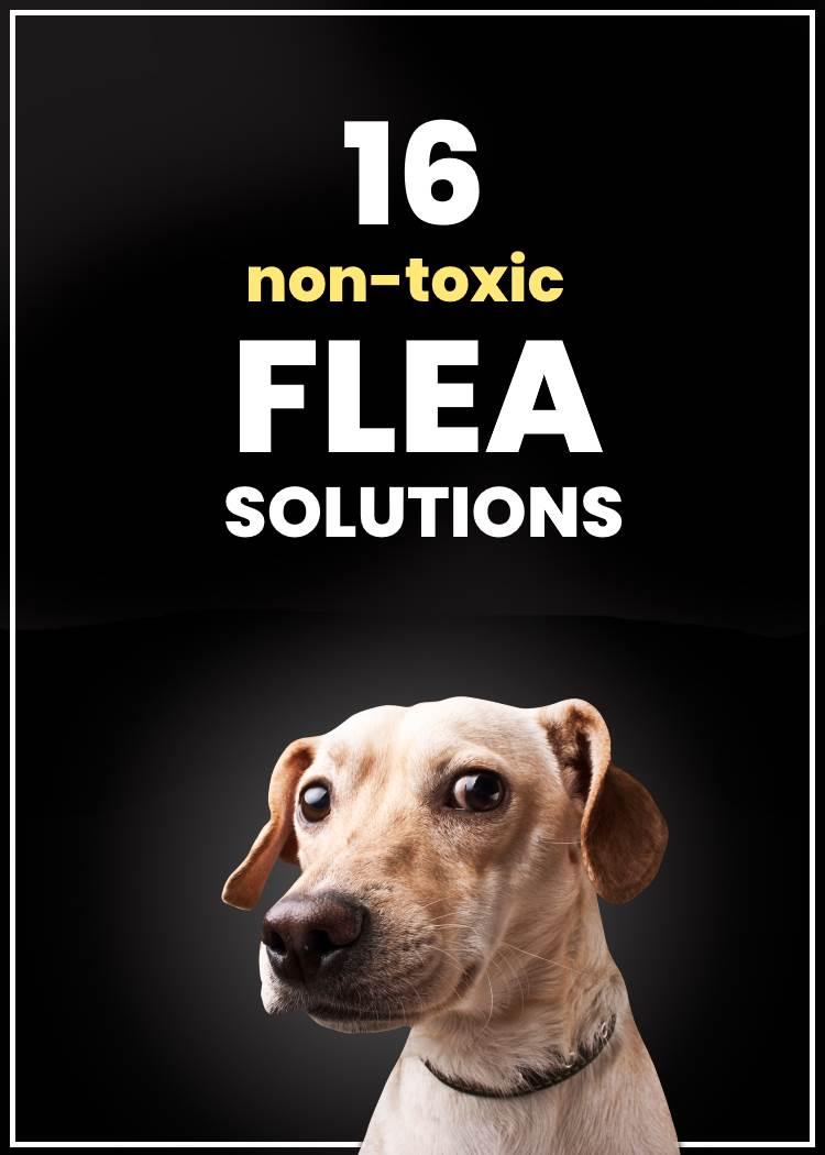 non-toxic diy flea solutions