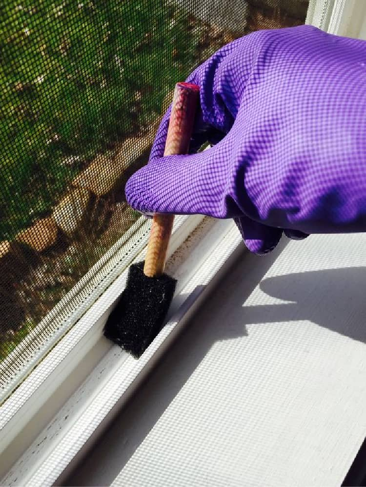Person with purple gloves cleaning window tracks with a sponge brush
