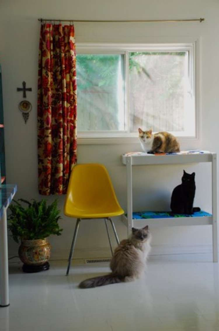 Repurposed changing tables converted into window stand for cats