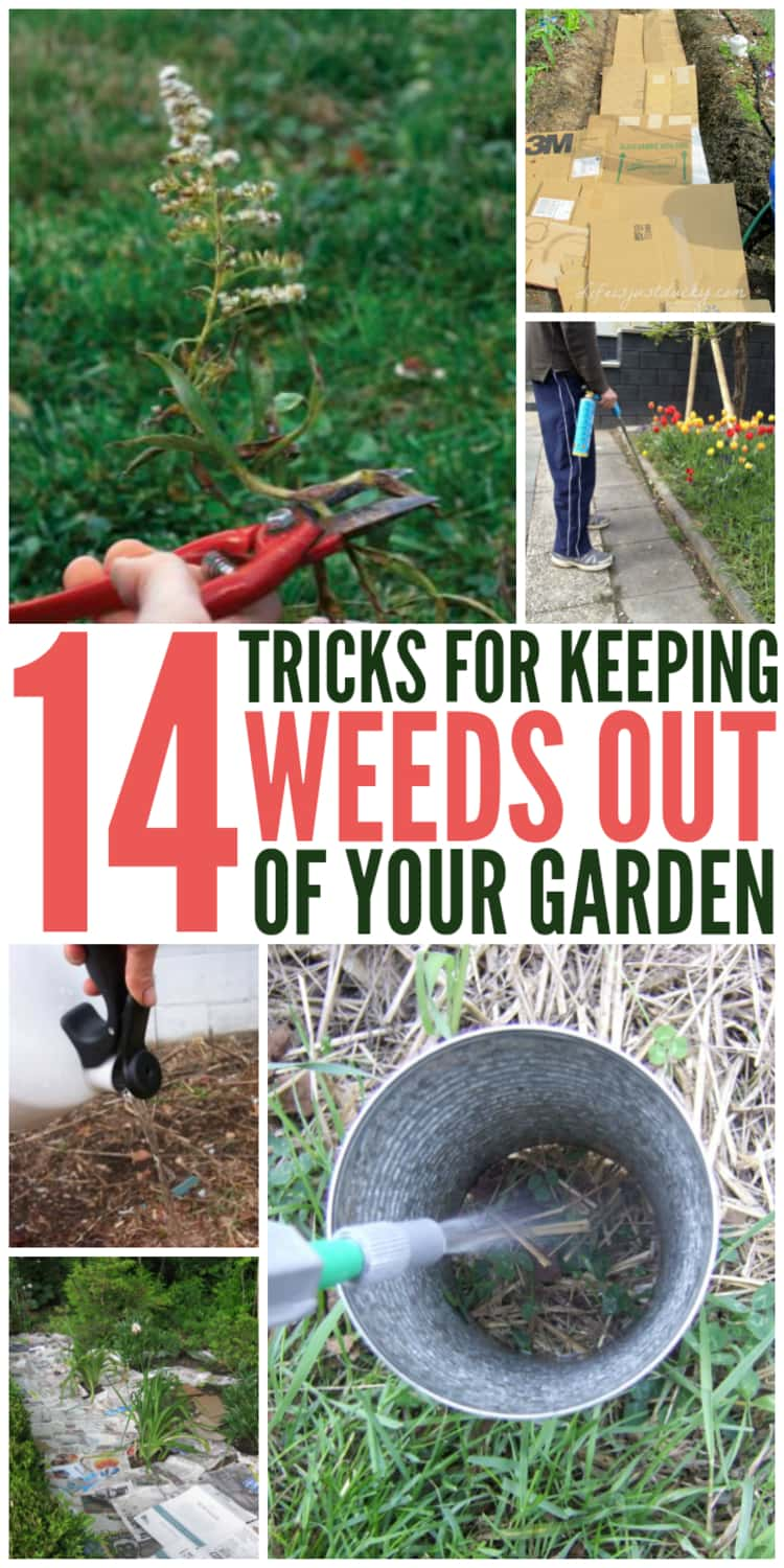 A 6-photo collage separated by the words 14 TRICKS FOR KEEPING WEEDS OUT OF YOUR GARDEN - person's hand pruning a diseased plant, trench covered with used carton sheets, person's hand holding kettle and pouring water in the soil, cobblestone path sprinkled with salt, and pesticide nozzle spaying into a DIY spray