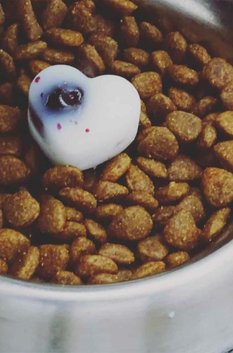 heart shaped coconut oil and blueberry frozen treat inside full bowl of dry dog food