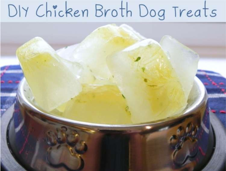 Metal dog bowl filled with ice cubes made with chicken broth.