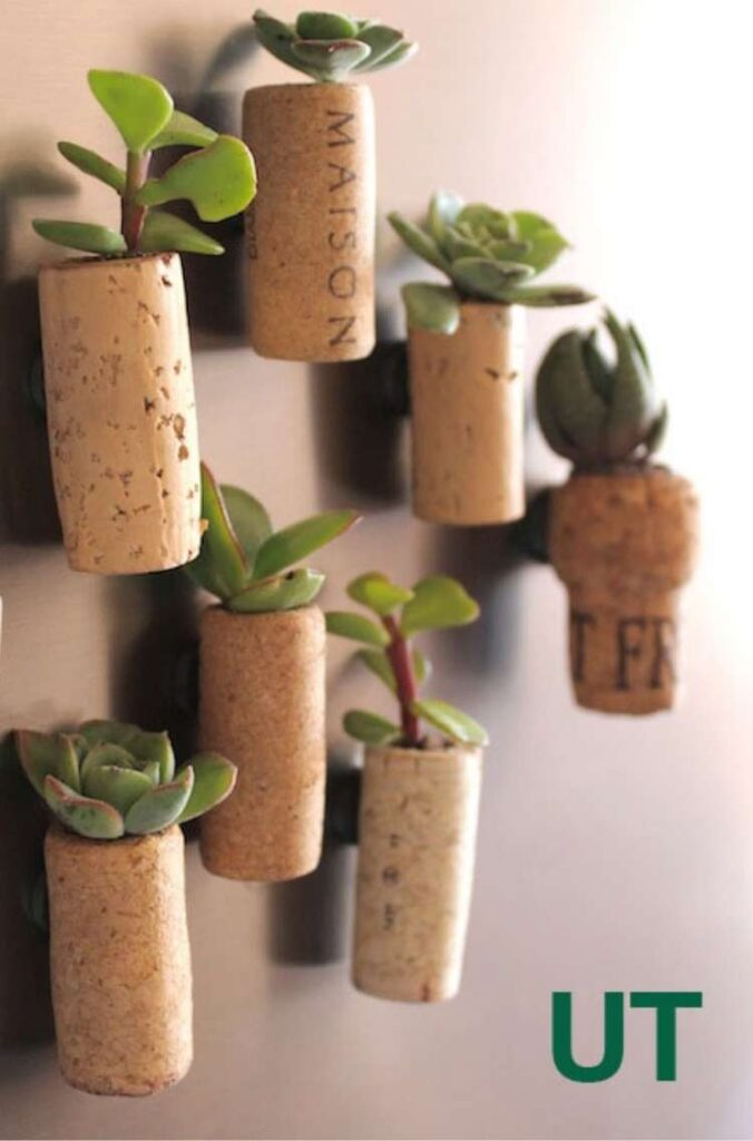 Succulents planted in wine corks with magnets attached to refrigerator.