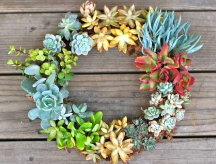 Succulents planted as a living wreath