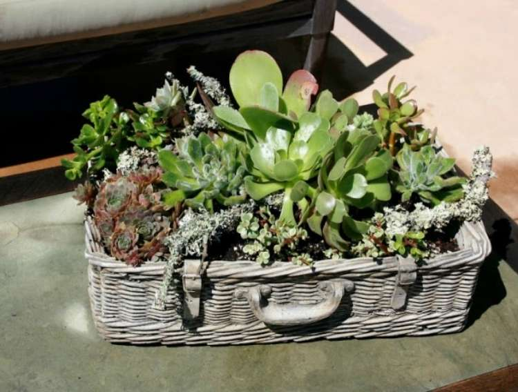 Succulents planted in a basket weaved into shape of a vintage suitase