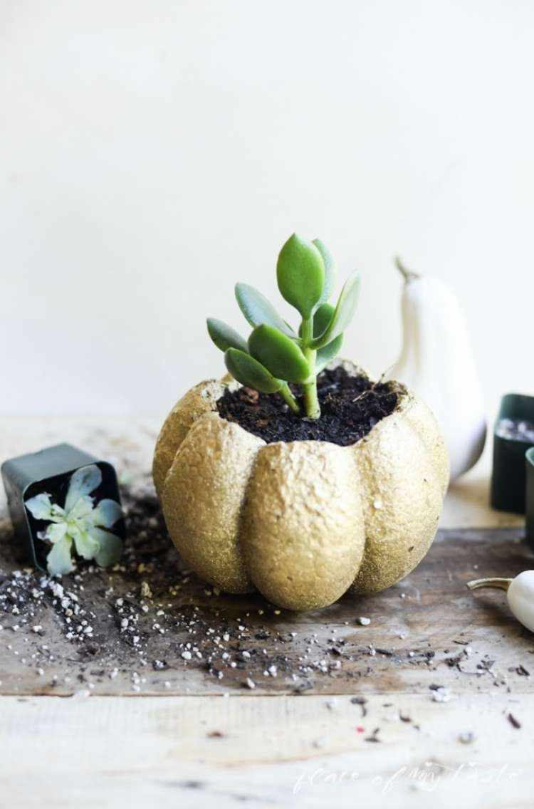 Succulent planted inside of a mini pumpkin with a succulent overturned nearby and dirt scattered on the table.