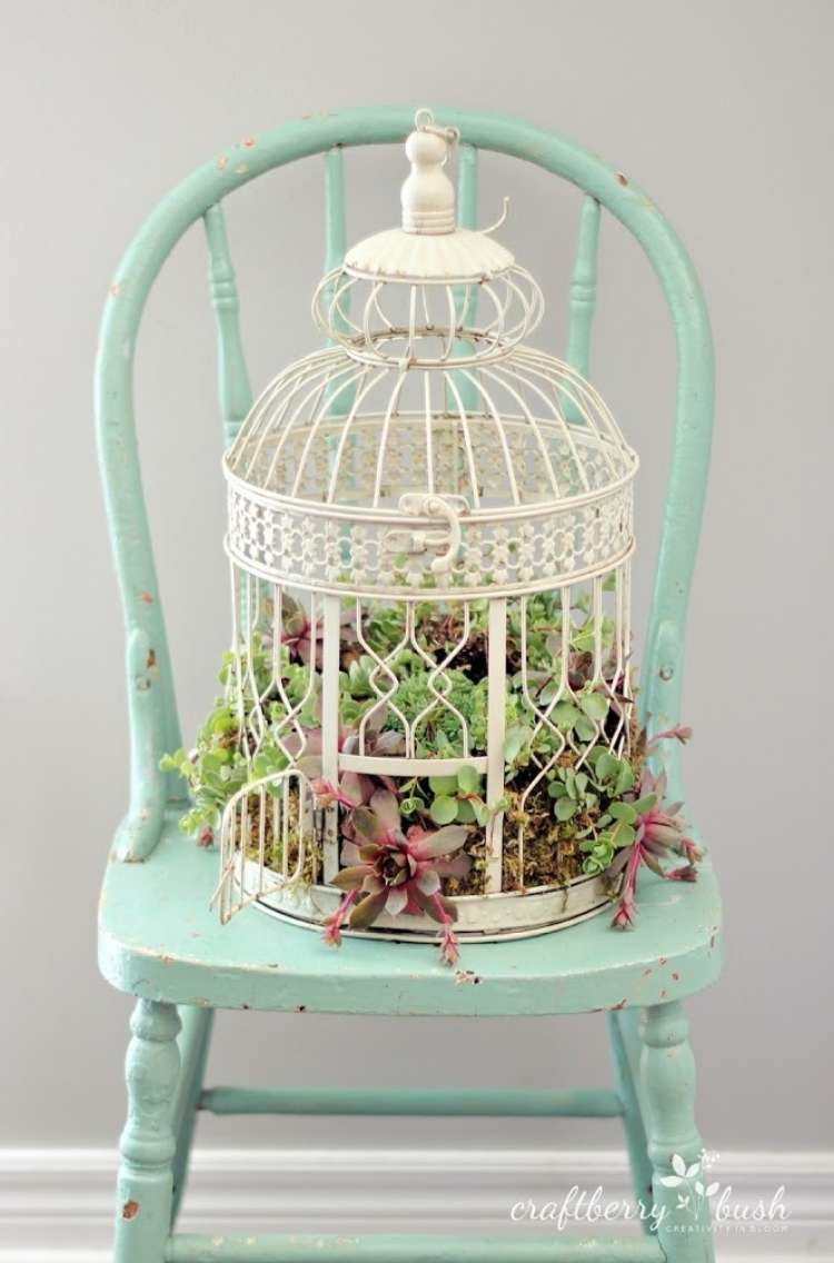 Succulents planted inside of a domed birdcage sitting on a wooden chair