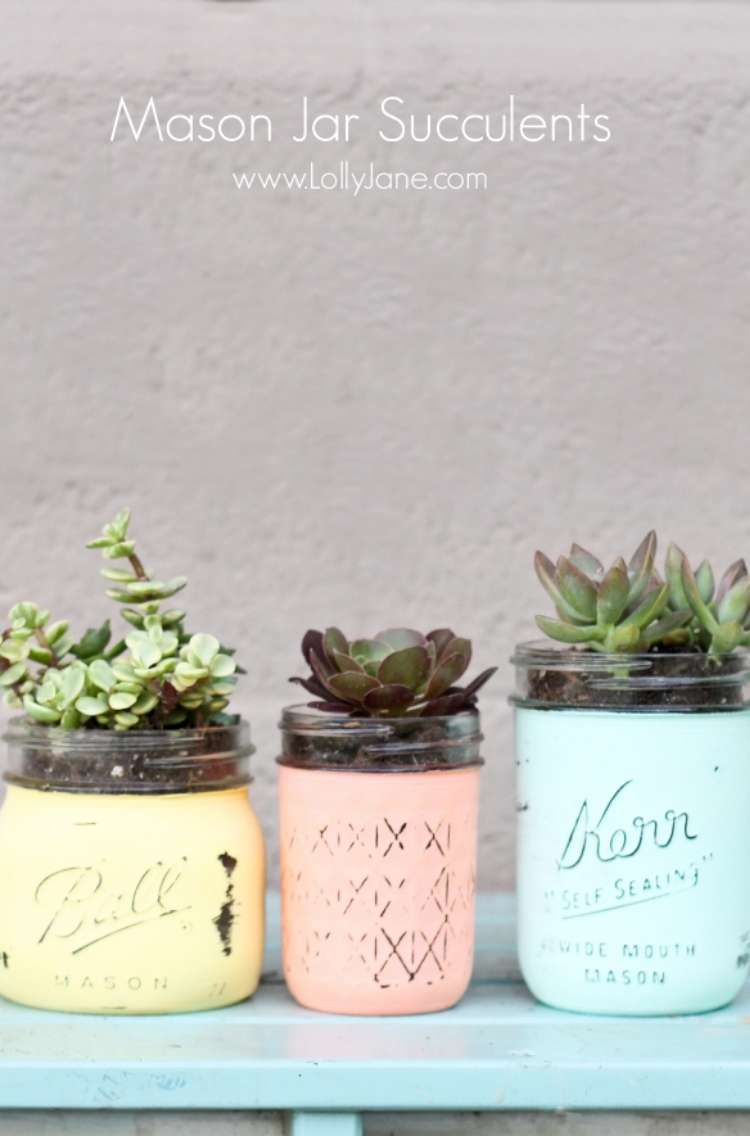 Succulents planted in 3 mason jars of different shapes and sizes