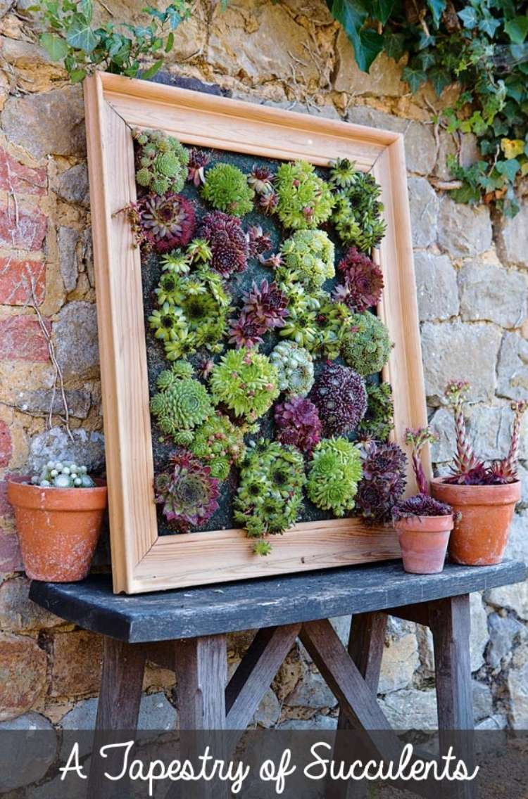 Succulents planted inside of a wooden frame, leaning against a brick wall surrounded by succulents planted in mini terracotta planters.