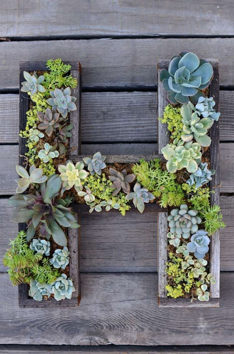 Succulents planted in a wooden planter in the shape of the letter H on a wooden plank background.