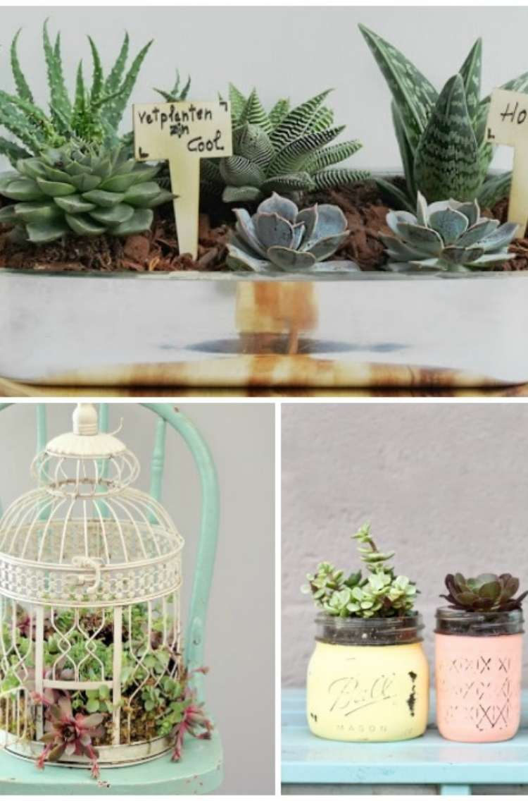 collage of creative ways to plant succulents. Succulents planted in baking dish, succulents planted in a bird house sitting on a wooden chair, succulents planted in mason jars
