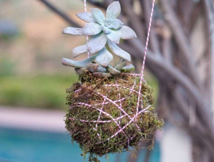 Succulent planted and hung from a tree with string