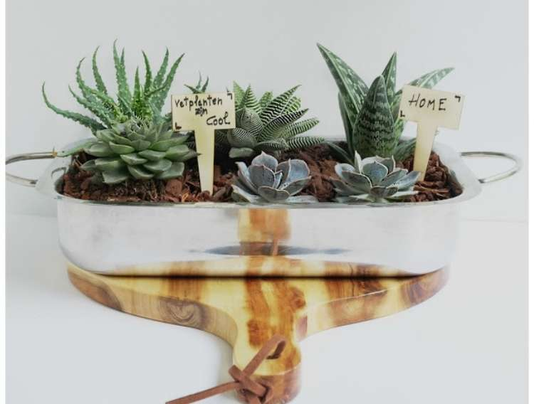 succulents planted in metal baking dish, on a wooden cutting board.